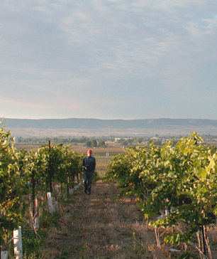 Ross Mickel in the vineyard